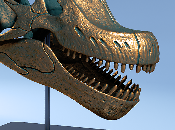 Giraffatitan - dinosaur skull replica 3d printed Teeth for stripping leaves from branches