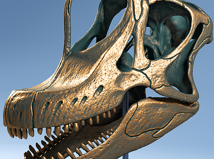 Giraffatitan - dinosaur skull replica 3d printed Modelled from scientific reference
