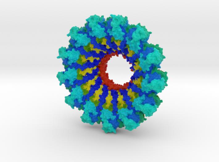 Parainfluenza Virus Nucleocapsid 3d printed