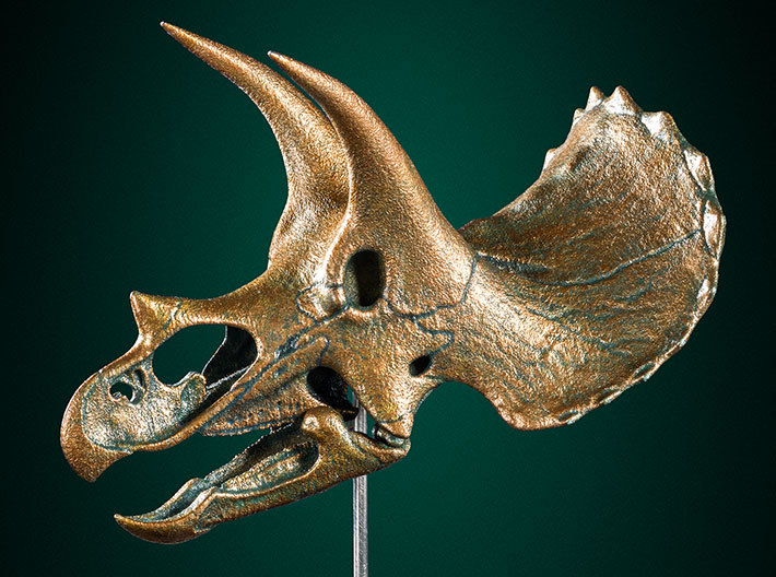 Triceratops - dinosaur skull replica 3d printed Correct proportions