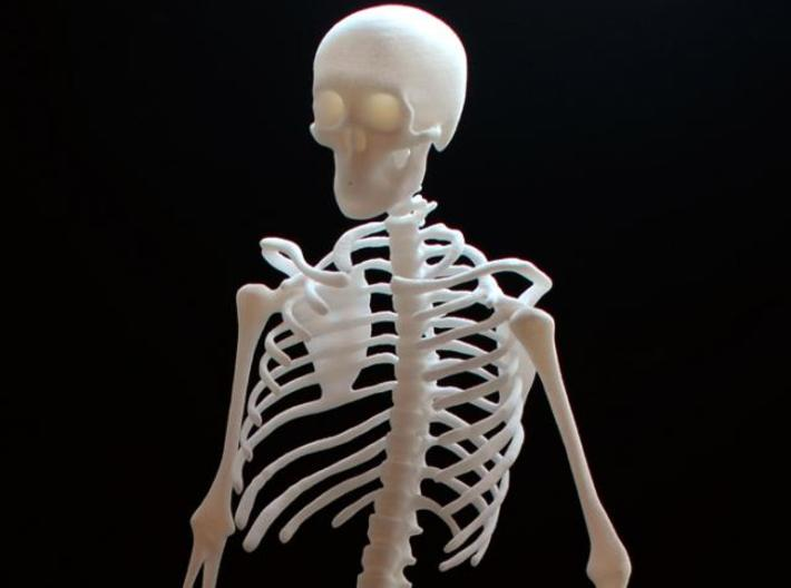 Skeleton 3d printed
