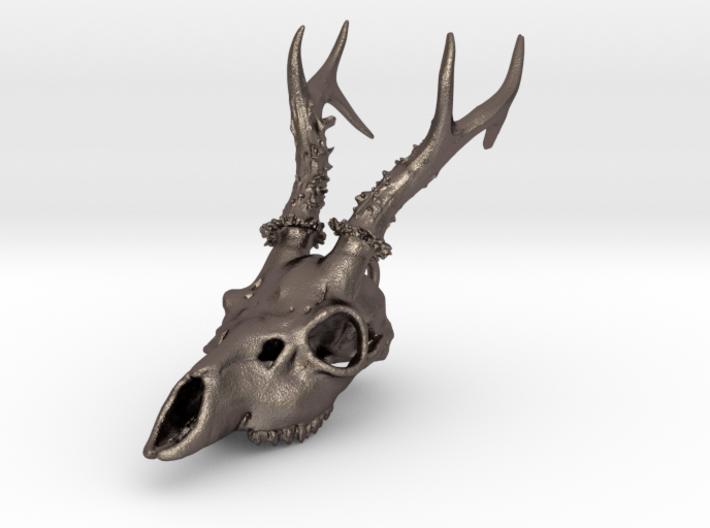 Capreolus skull with teeth 3d printed