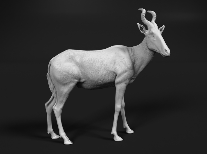 Red Hartebeest 1:20 Standing Male 3d printed