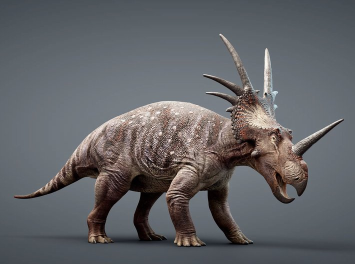 Styracosaurus 1/50 or 1/25 Scale Model - Colored 3d printed Rendered Image