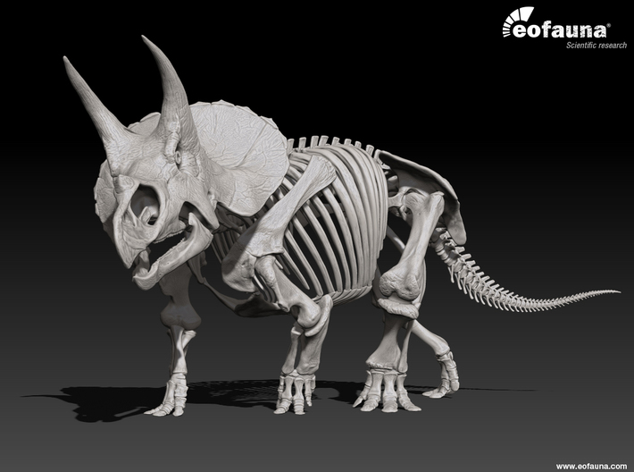 Triceratops horridus skeleton 1:48 scale 3d printed 3D Triceratops skeleton by EoFauna, 2014