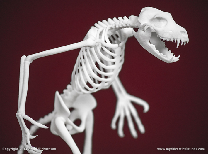 Werewolf Skeleton 3d printed