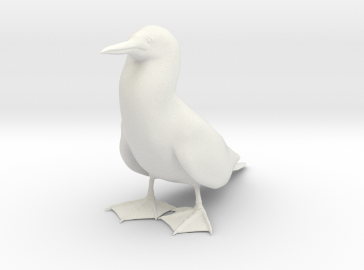 Blue-Footed Booby 3d printed