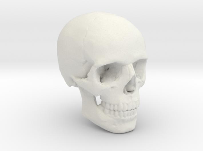 18mm 0.7in Human Skull Crane Schädel че́реп 3d printed