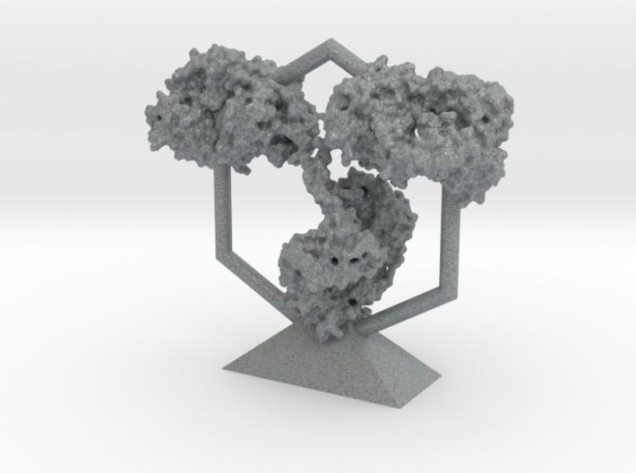 Antibody - IgG - Trophy 3d printed