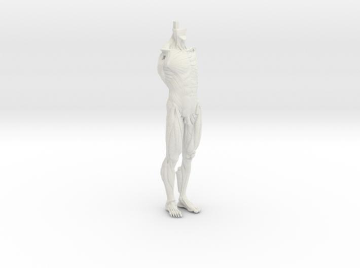 Anatomy Body 3d printed