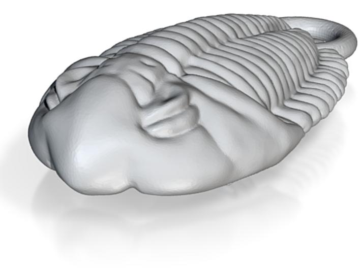 Trilobite Ornament 3d printed
