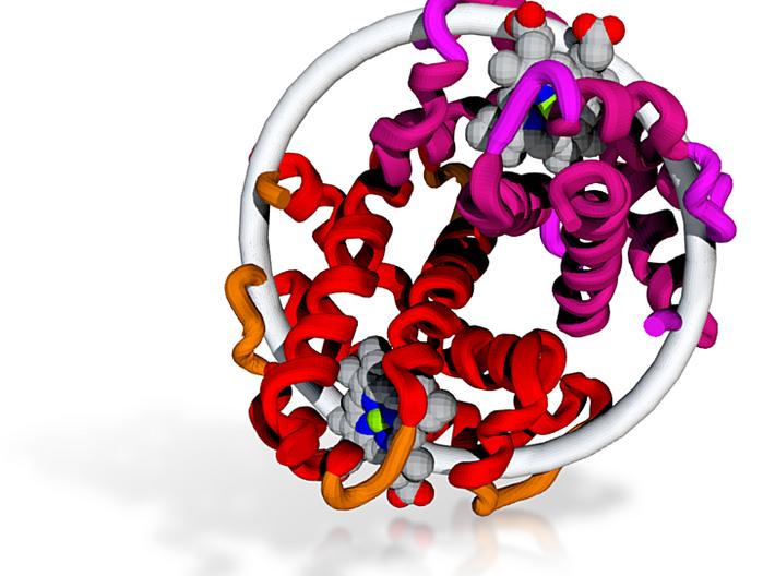 Hemoglobin - 20 Million X - alpha & beta subunits 3d printed