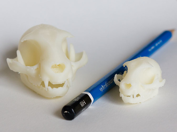 """Cat skull Sculpture 3d printed Mini and Standard model with an HB pencil for scale. Printed on """"MakerBot: The Replicator"""" at the local college."""