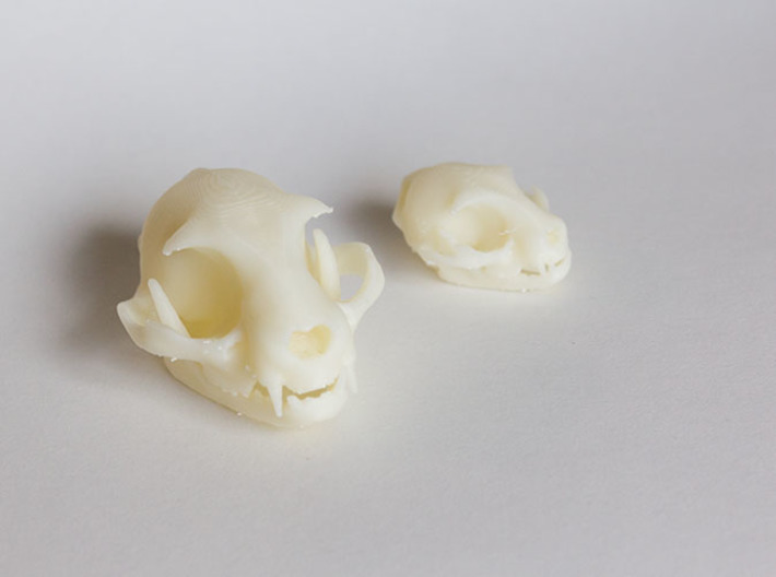 """Cat skull Sculpture 3d printed Standard and mini sized models. Printed on """"MakerBot: The Replicator"""" at the local college."""