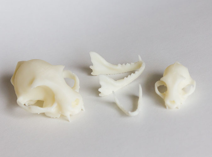 Mid-Sized Cat Skull Sculpture 3d printed Side view with parts separated