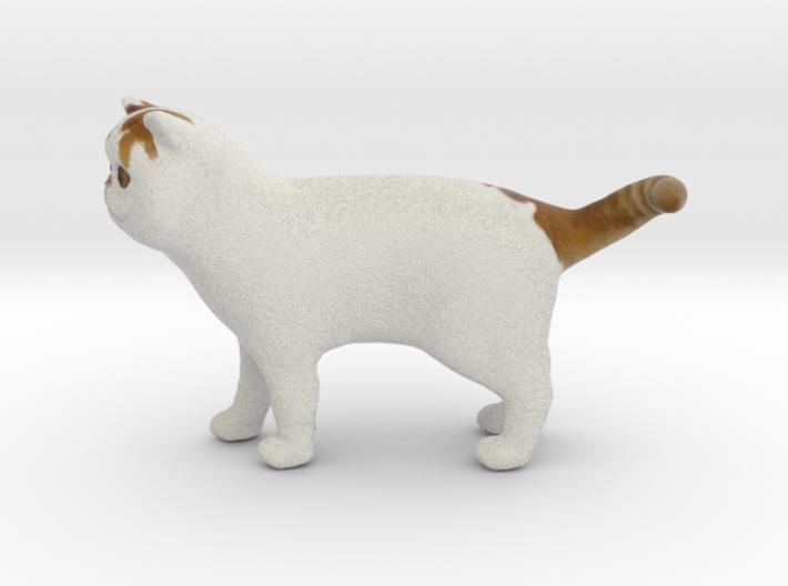 Standing Exotic Shorthair Cat 3d printed