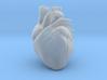 Anatomical Heart 3d printed