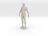 Male Anatomy Sculpture 3d printed