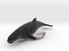 humpback whale middle size (color) 3d printed