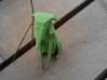 Folded Sculpture Dogs, Italian Greyhound 3d printed Strong flexible plastic in green, overall view from front
