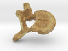 Model of vertebra  3d printed