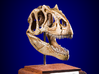 Allosaurus skull with articulating jaw 3d printed