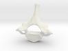 Neck vertebra - C7 3d printed