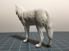North American Gray Wolf 3d printed