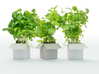 BOX POT 3d printed visualisation with herbs