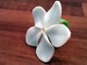 Gardenia Ring 3d printed Full color plastic, not sandstone