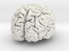 Brain replica full scale from MRI scan 3d printed