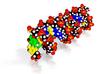 "DNA Molecule Model ""Benjana"", Size = Standard 3d printed"